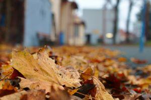 Číst dál: Podzimní úklid